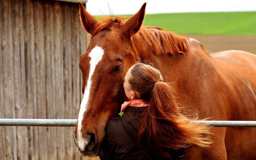 Pferdegestütztes Coaching für Jugendliche zur Entdeckung von Potenzialen und Stärkung des Selbstvertrauens