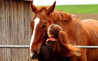 Ausbildung pferdeunterstütztes Coaching – Schwerpunkt Führungs- und Teamentwicklung