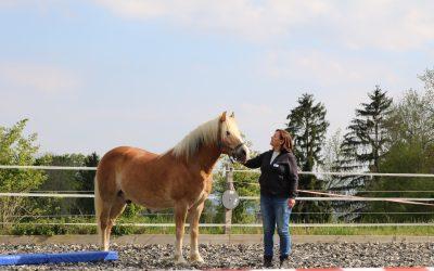 Führungskräfte-Seminar mit Pferden Termine in 2020
