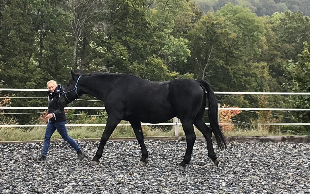 Wie kann Coaching mit Pferden Ihre Führungskompetenz stärken?