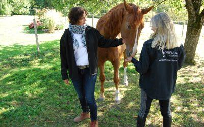 Coaching mit Pferden: Was zeichnet den Einsatz von Pferden in Coachings und Trainings aus?